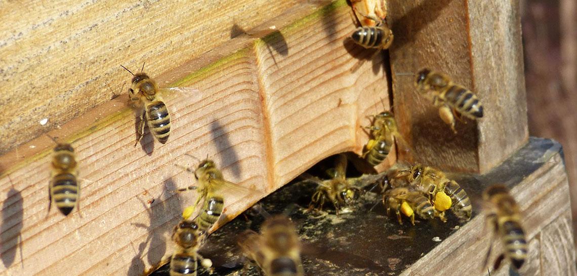 Mit den Bienen durchs Jahr