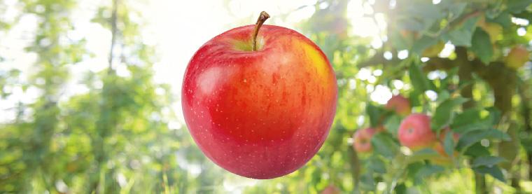 Tour de Pomme N° 7