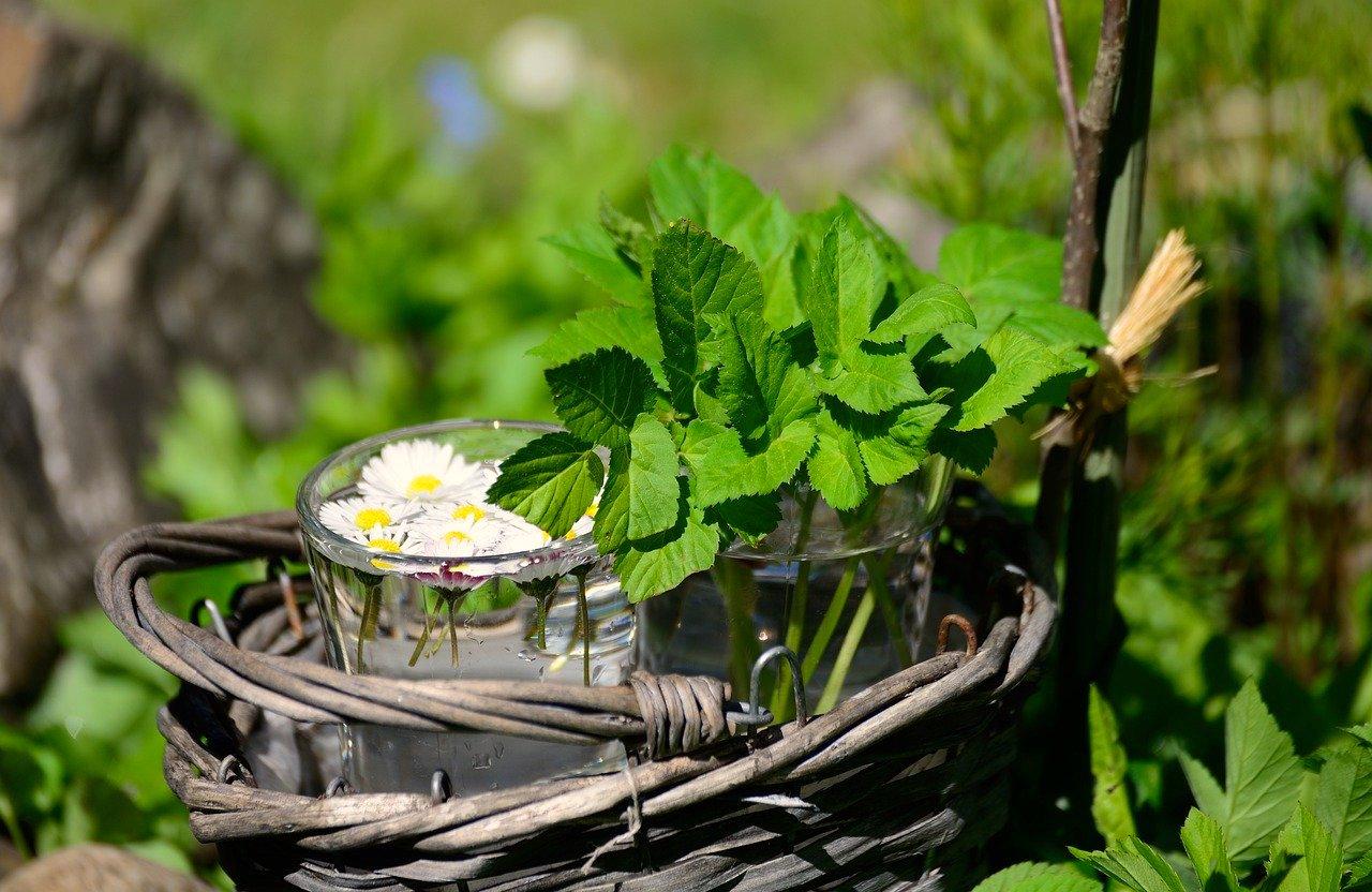Hildegard von Bingen, ihr Leben, ihre Heilkunst, ihre Rezepte