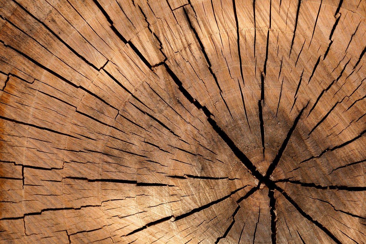 Organic Art: Rustikale Kunst – Strukturen und Texturen der Natur