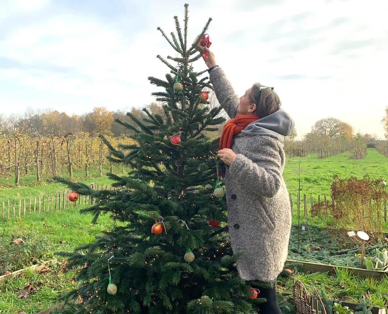 Weihnachtsbaum für die Tiere