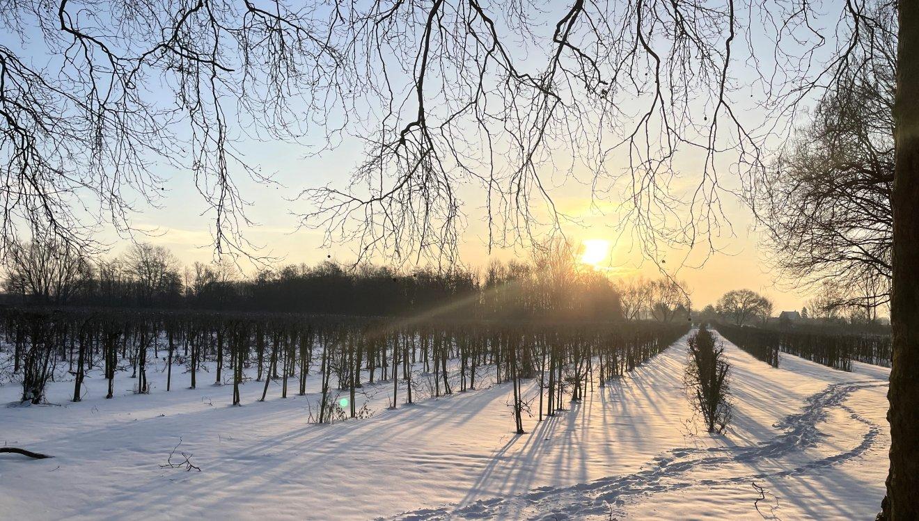 Plantage bei Sonnenaufgang