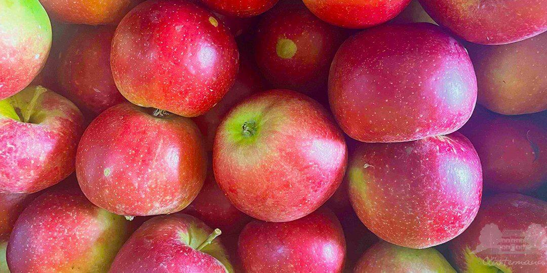 Apfelsorte Freya